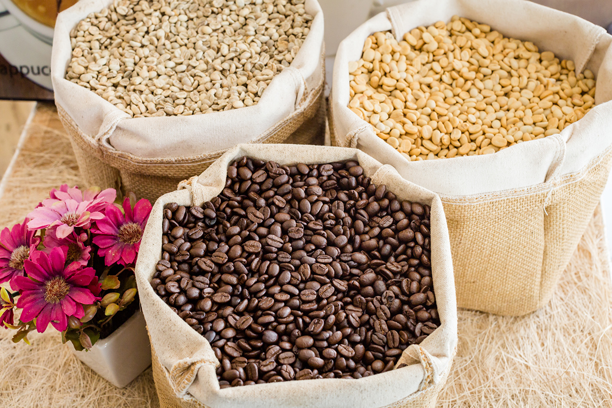Coffee bean roasted and unroasted.